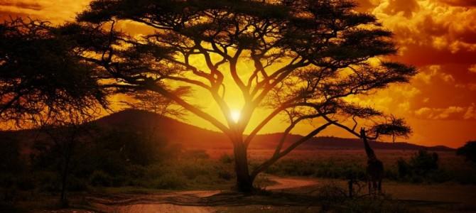 Safaris en África: Una aventura única