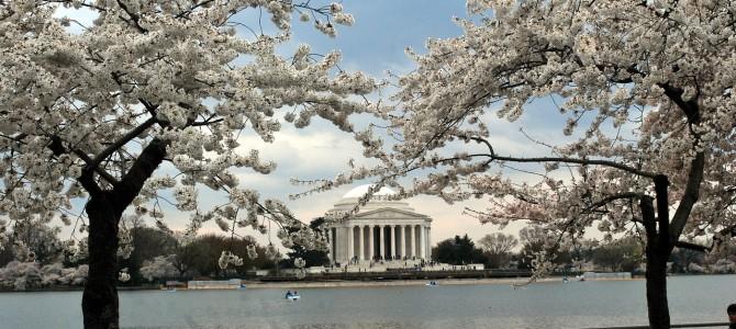 El Festival de los Cerezos en flor en Washington