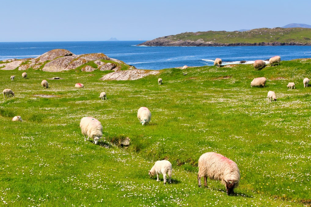 En la Península de Dingle podrás disfrutar de los paisajes marítimos más espectaculares de Irlanda.